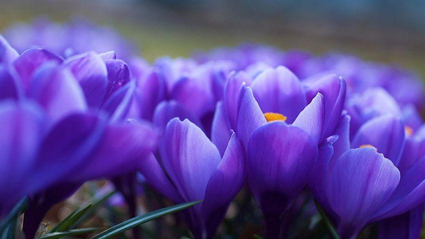 Химия запаха цветов Фиалки