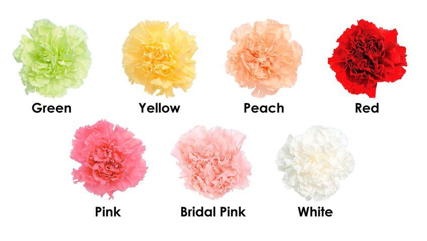 Химия запаха цветов Гвоздики