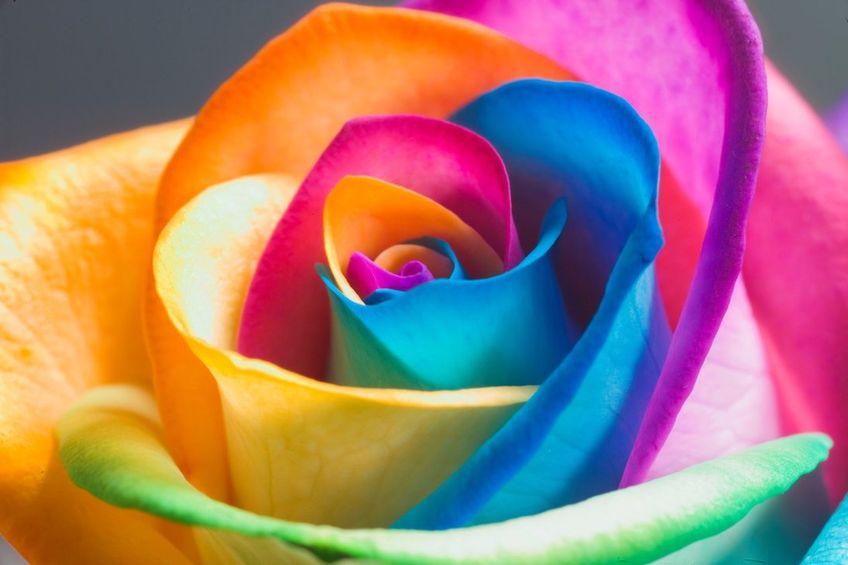 Химический состав запахов - Химия запаха цветов