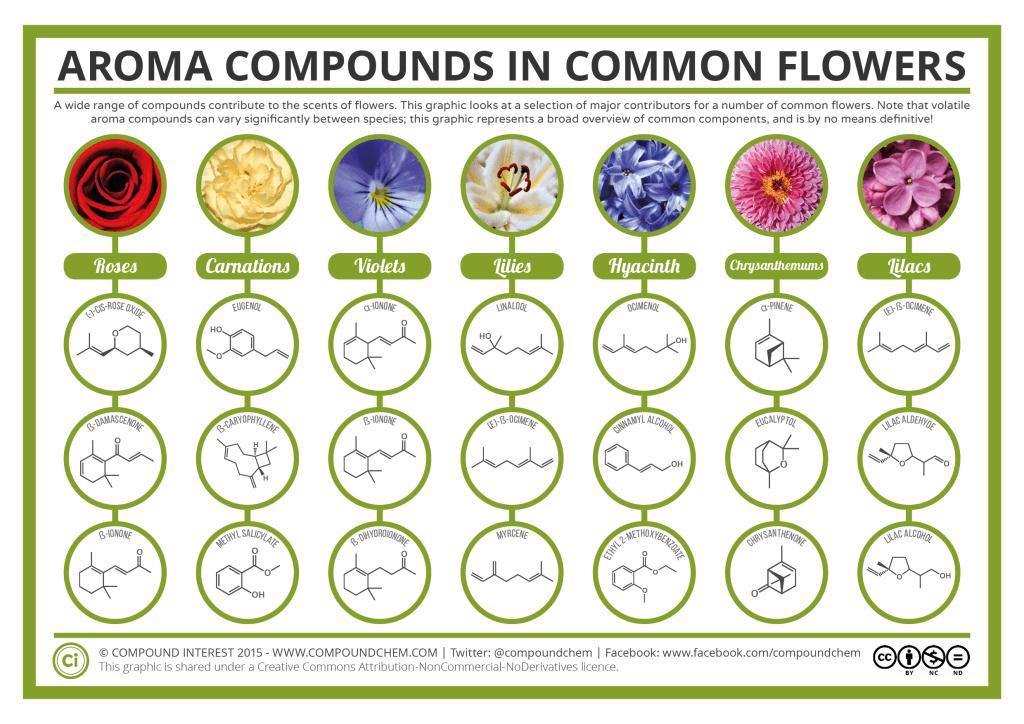 Химический состав запахов цветов. Химия запаха цветов и их ароматов