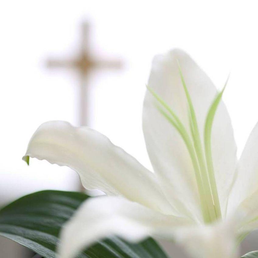 Химический состав запахов цветов Лили